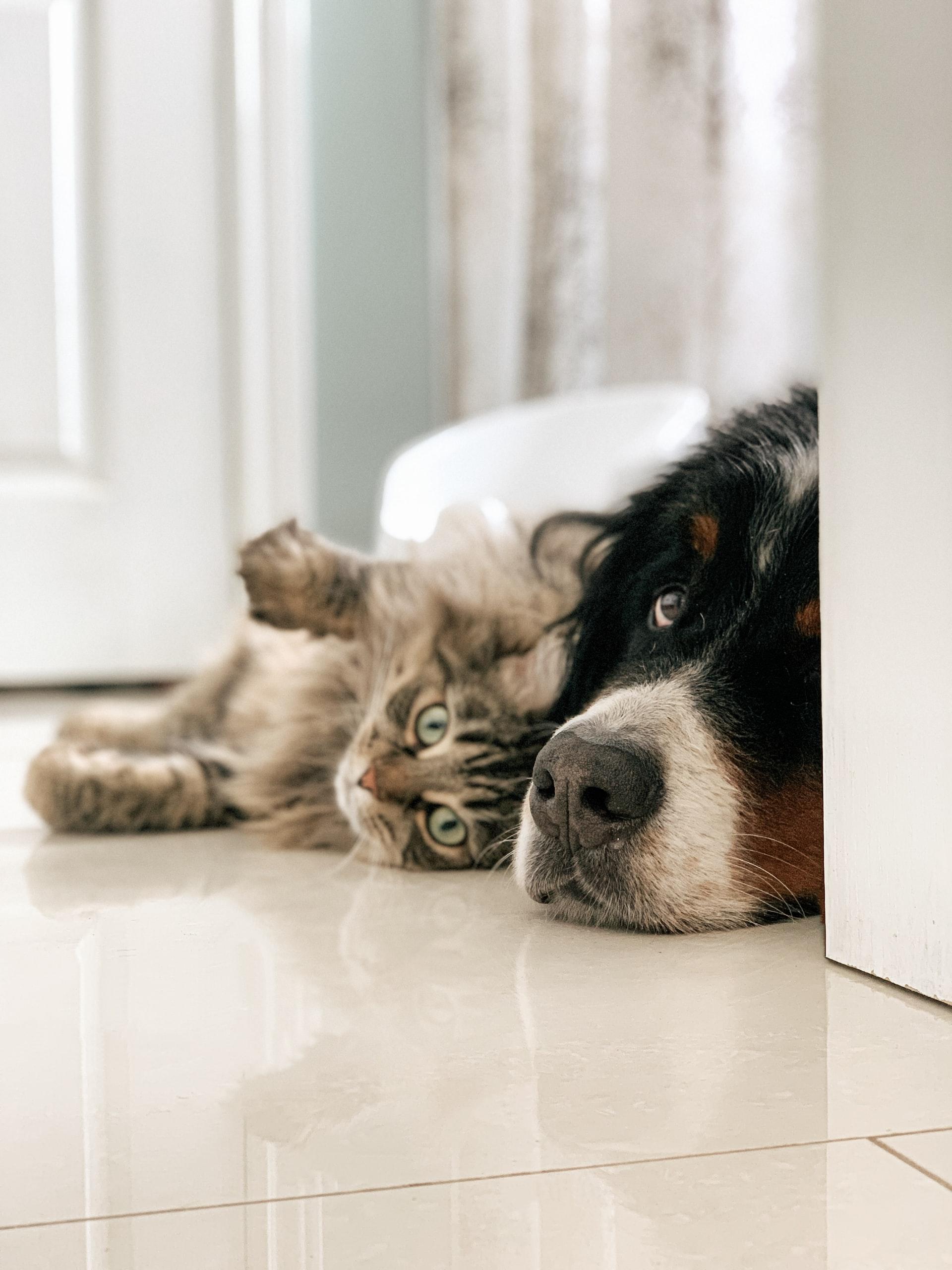 Er I som hund og kat, når der skal ses fodbold?